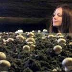 Iva investigating the mushrooms