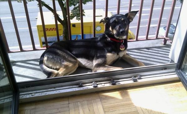 Klara the Dog